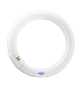 Lâmpada Circular 22W